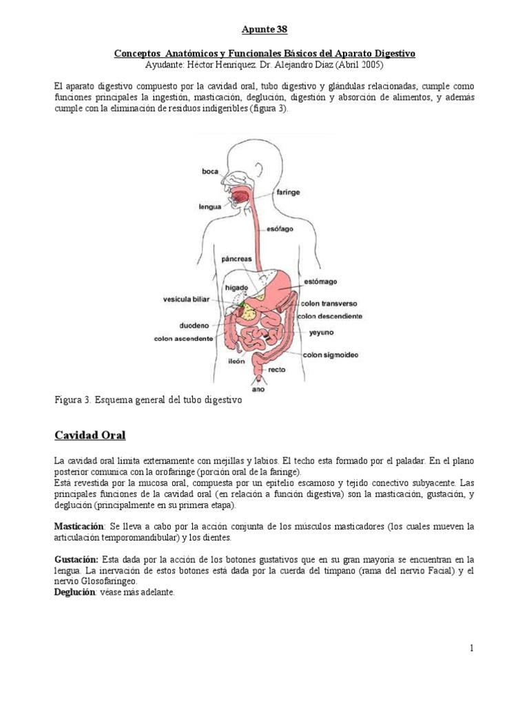 Apunte38 Conceptos Anatómicos y Funcionales Básicos del Aparato ...