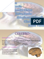 Expo Neuroanato2003