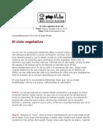 El Ciclo Vegetativo de La Vid