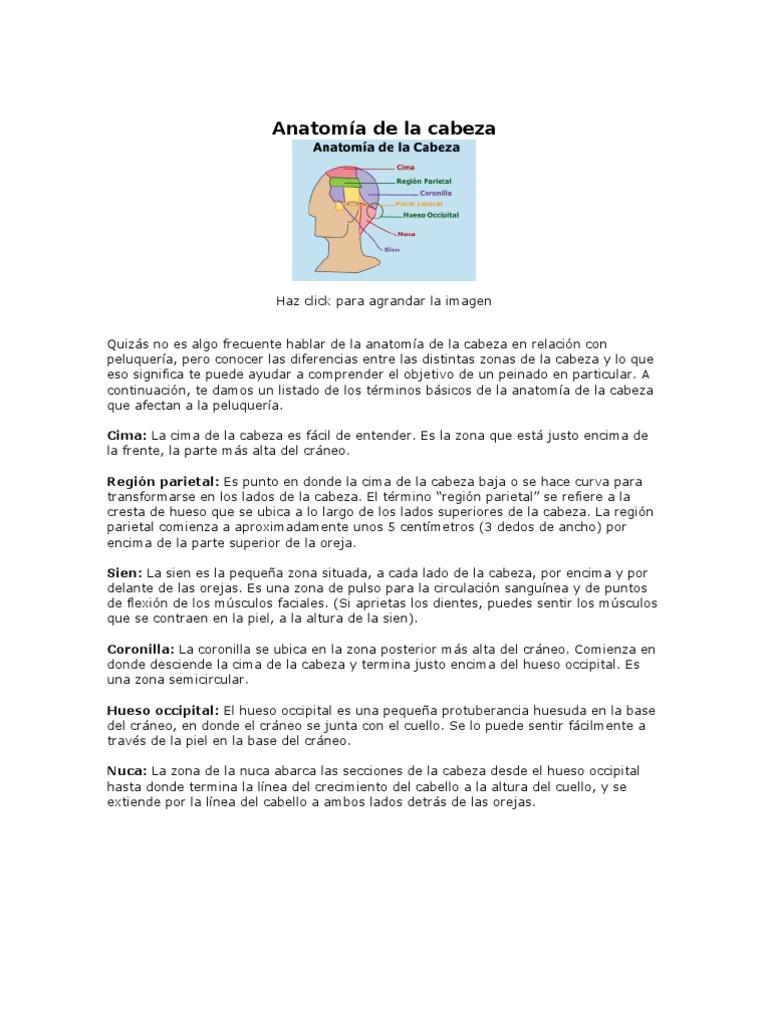 Anatomía de la cabeza CORTES