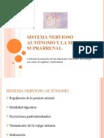 Sistema nervioso autónomo y la medula suprarrenal cap 60