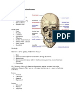 Cranial Anatomy Revision