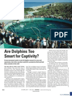 Are Dolphins Too Smart to Be Captivity?