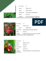 koleksi tumbuhan