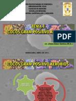 TEMA 4 Streptococcus