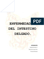 Trabajo Intestino Delgado Final