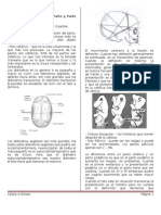Obstetricia 8ª Clase