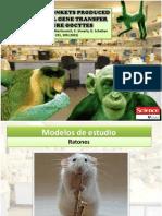 Transgenic monkeys produced by retroviral gene transfer