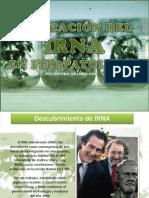iRNA in phytopathology
