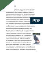 cuidados de aves