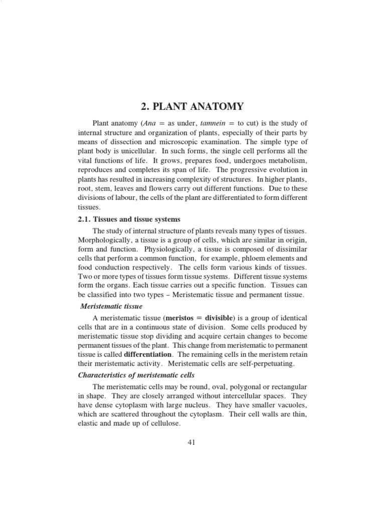 Plant Anatomy | Tissue (Biology) | Plant Stem