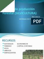 Sistema de producción Forestal (SILVICULTURA)