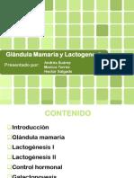 Glandula Mamaria y Lac to Genesis