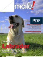 Animale Labrador Inter Orkut