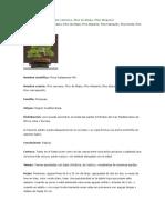 Pinus Hale Pens Is Cuidado Bonsai