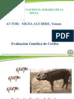 Mejoramiento Genetico de Cerdos