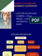 1-cinturaescapular-100406212245-phpapp02