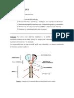 sindrome_hemiplejico