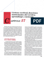 FUNCIONES INTELECTUALES DEL CEREBRO