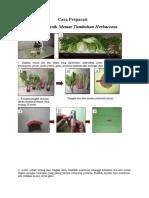 Cara Preparasi Teknik Memar Herbaceoaus