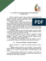 Plante Oleaginoase Intalnite in Industria Extractiva