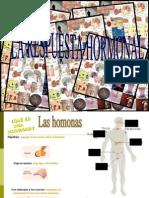Presentaci+â-¦n Yone y Andrea (Sisteme endocrino)