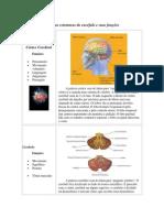 Algumas estruturas do encéfalo e suas funções