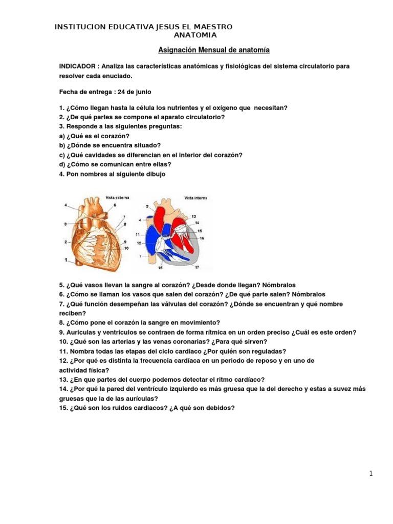 Asignación mensual de anatomía