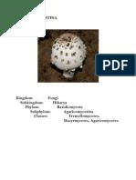 Kingdom Fungi Phylums