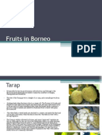 Fruits in Borneo1