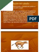 05_Evolución del caballo