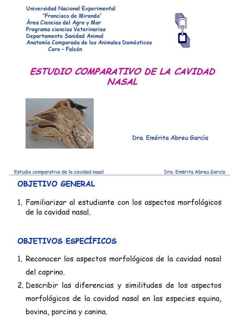 Lujoso Anatomía Externa Porcina Regalo - Imágenes de Anatomía Humana ...