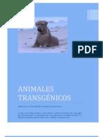 ANIMALES TRANGÉNICOS