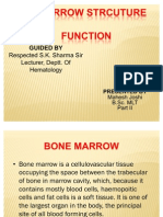 Bone Marrow Strcuture and Function
