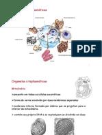 Aula 3 Organelas citoplasmaticas