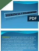 POLIMORFISMO