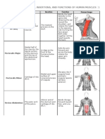 Origins, Insertions, And Functions of Human Muscles