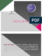 Ciclo Del Acido Citrico Ciclo de Krebs Estudiantes