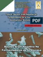 TEMA 8 Bacilos Gram Negativo No Ferment Adores. Haemophilus