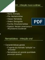 ptt LMC