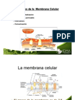 Clase Membranas y Transporte 2011
