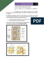Articulaciones Columna Vertebral Continuacion (5 Parte)