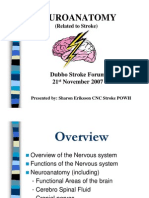 Neuro Anatomy- Dubbo 07
