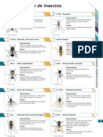Identificacion_de_Insectos