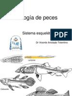 biologia de peces, Esqueleto