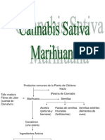 Presentacin de La Marihuana 1210161486964081 9