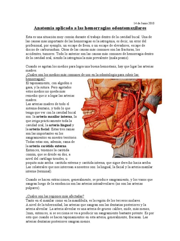 Famoso Anatomía Tuberosidad Del Maxilar Bosquejo - Anatomía de Las ...