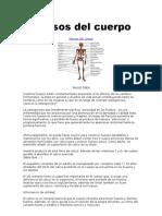 Huesos Del Cuerpo 13