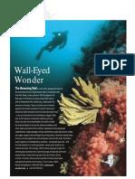 Diving Landmark