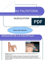 Anatomia Palpatoria Muscular